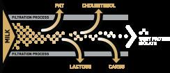 Filtration Process Diagram
